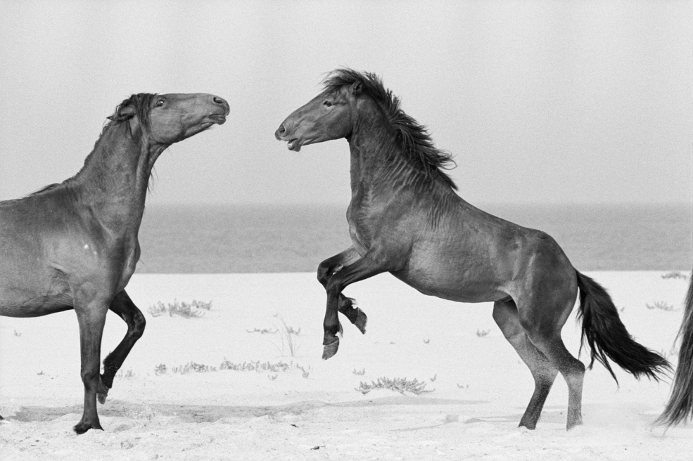The Wild Horses of Sable Island - The Collection - Page 1